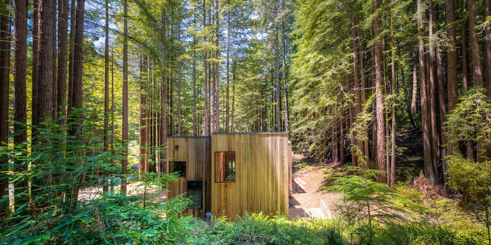 redwoods 005b